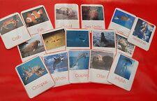 UNDER THE SEA - 16 sea animals/creatures - Flash cards