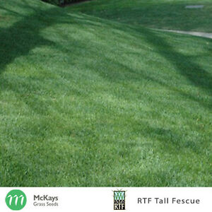 McKays RTF Tall Fescue Grass Seed - 5kg - Lawn Seed Free Postage
