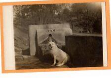 Real Photo Postcard RPPC - Happy Pit Pitt Bull Dog