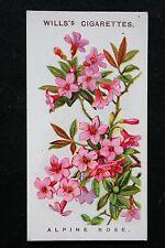 Alpine Rose   Original 1913 Vintage Colour Card  VGC