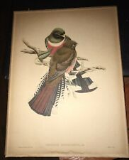 Gould Birds TROGON MEXICANUS Antique/Hand-Colored/Lithogrpah/1838/Make Offer/
