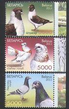 Belarus 2011 Pigeons/Birds/Nature/Sports/Racing/Carrier/Pets 3v set (n36145)
