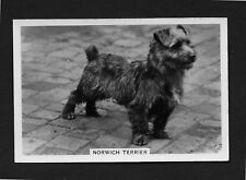 Norwich Terrier from series Dogs by Senior Service Cigarettes card #34