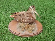 EURASIAN WOODCOCK (Scolopax Rusticola) VINTAGE TAXIDERMY MOUNTED ON WOODEN BASE