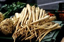 25 Graines de Salsifis Mammouth BIO plantes potager legume ancien jardin