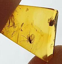 UNIKAT  Bernstein fossiler Einschluss mit 2 Insekten Sammlung neu L8167