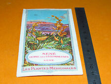 CHROMO 1900-1920 BON POINT ECOLE PLANTE MEDICINALE SENE CASSIA SENNA