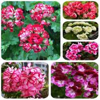200 PCS Seeds Combination Bonsai Perennial Flowers Mix Wildflower Garden NEW Y Z