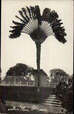 Singapore? Weller's Palm c1915 Real Photo Postcard