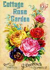 1897 Cottage Rose Vintage Flowers Seed Packet Catalogue Advertisement Poster