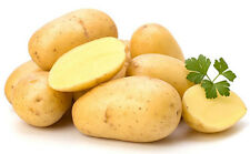30 Seeds Sweet Potato Seeds Thailand Seeds + Free delivery