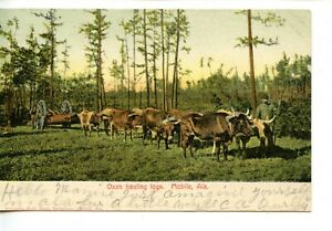 Team of Oxen Hauling Logs-Mobile-Alabama-Vintage 1907 Occupation Postcard