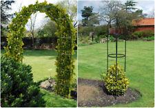 ARCH OR OBELISK METAL GARDEN CLIMBING CLIMBER PLANTS ROSES IVY PLANTS TRELLIS