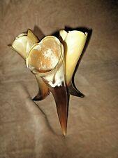 ancienne bouquetière en cornes de bovins-cornes d'abondance-vintage 1950