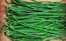 Long Beans - Barbatti (COWPEA) SVS-804, 40 Hybrid Veg Seeds
