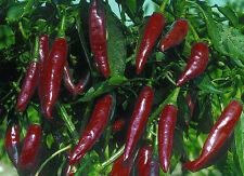HUNGARIAN HEIRLOOM!!! Kalocsai Hot Spice Paprika 20+ seeds