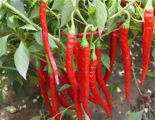 50Pc Red Spices Spicy Chili Pepper Seeds Healthy Garden Vegetable Chili Peper