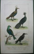 Antique (Pre-1900) Small (up to 12in.) Birds Art Prints