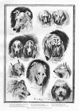 LOUIS WAIN DOG SHOW BASSETT HOUND WOLFHOUND IRISH TERRIER SHEEPDOG BLOODHOUND