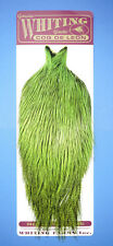 Whiting Coq de Leon Cape Badger dyed FLUO GREEN CHARTREUSE