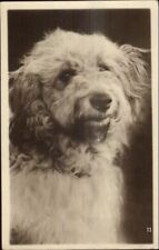 Cute Dog Close-Up Terrier? Sunbeam Series Real Photo Postcard