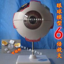6 times magnification Giant Eye Model Anatomical Model 26*12.5*12.5cm #A455 LW