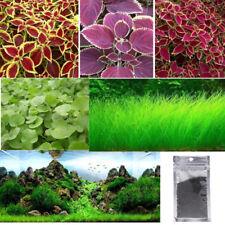 Verde Planta Acuática semillas de Semillas de Hierba de Agua Acuario Peces Tanque Decoración au