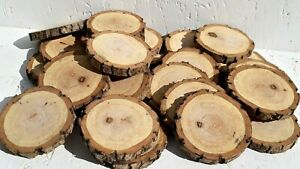 WHOLESALE 2-10CM Wood Log Slices Discs Round Christmas Pyrography Rustic Crafts