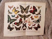 Butterflies & Moths - 1924 Book Print