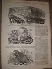 SNAKE le cobra di Capello 1848 Imprimer