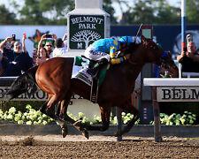 AMERICAN PHAROAH, 2015 Belmont Stakes Winner, 8x10 Color Photo