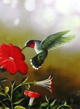 "Ruby Throated Hummingbird  By Jim Hansel Hummingbird Print Image Size 12"" x 16"""