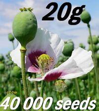 20g aprox.40 000 Bulk Vegetables garden Papaver Somniferum Seeds TASMANIAN POPPY