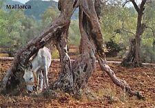 Bg35404 mallorca donkey olivos milenarios spain