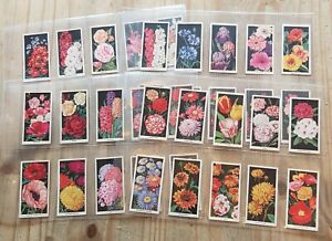 Carreras Cigarette Cards – Flowers – Part Set / 35 Cards – 1936 – Listed