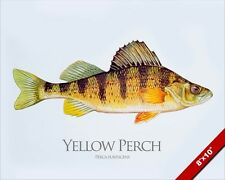 YELLOW PERCH FISH PAINTING FRESHWATER FISHING ART REAL CANVAS PRINT