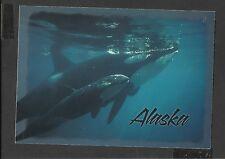 Alaska Joe Colour Postcard Orca Mother Teaching her Baby Alaska unposted