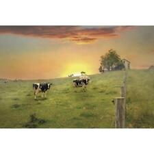 Lori Deiter Morning Moos Cow Pasture Art Print 18 x 12