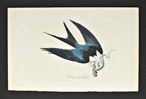 Audubon 1st Edition Octavo Swallow - tailed Hawk Pl. # 18