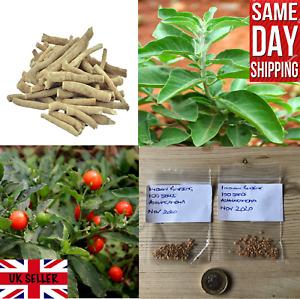 Indian Ginseng 100+ FRESH Seeds (Withania Somnifera)   Same Day Dispatch