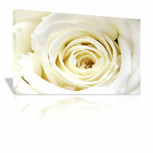 Close up of the center of a white Rose Floral framed canvas print - C118