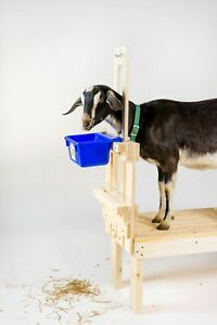 Best Goat Stand + Fits all Goats for Milking and Trimming - Natural Wood