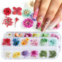 3D Real Dry Dried Flower Nail Stickers Nail Art Tips Salon Nails Decoration Tips
