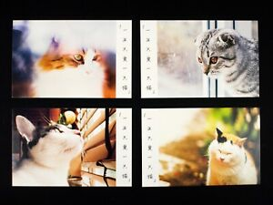 Box Set Pack Of 30 Postcards Cats Kittens Kitties Cute Fluffy Bookmarks #0001