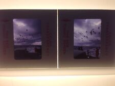 Lot 2 Vintage 1971 Sea Gulls Seagulls Ocean Dock Artsy Photograph Color Slides