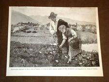 Esposizione di Venezia del 1887 Fiori e dolci parole Quadro di Noè Bordignon