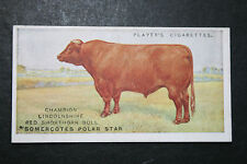 Lincolnshire Red Shorthorn Bull   Vintage Picture Card #  VGC