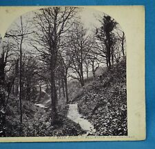 1860s Stereoview Photo Fairlight Glen Hastings Sussex By F S Mann