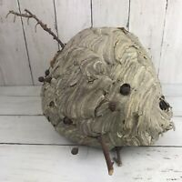 """Hornets Nest Wasp Bee With Tree Limbs Attached Man Cave Taxidermy 8 1/2"""""""