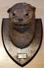 More details for vintage taxidermy otter head / mask on wooden shield - huntingdon hounds 5.5.51